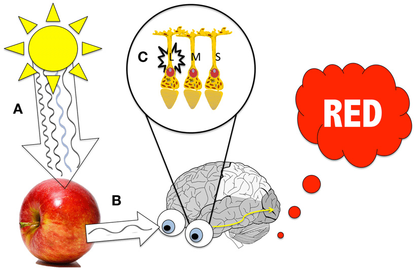 Figure 4 - Seeing red.