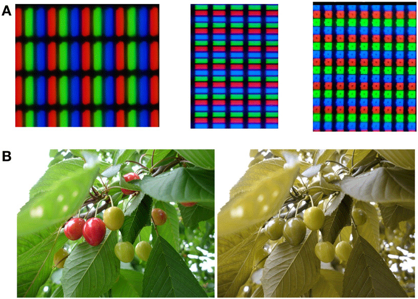 Figure 5 - A. LCD arrays and B. color blindness simulation.