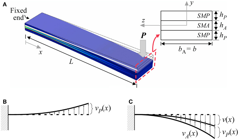 Frontiers | Investigation of Interfacial Shear Stresses