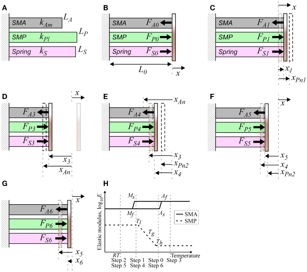 Frontiers Investigation Of Interfacial Shear Stresses Shape Cantilever Diagram Registration To Strength The Pdf