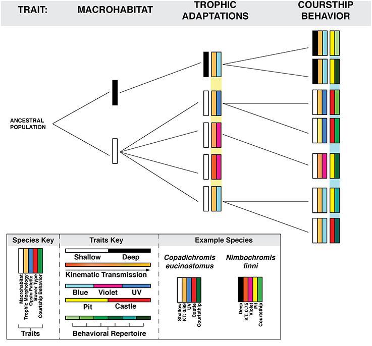 Adaptive radiation essay