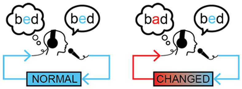 איור 1 - דיאגרמה של ייצור מילים רגיל (משמאל) ומילה ששונתה (e הוחלף ב-a) כך שתישמע כמו שגיאה (מימין).