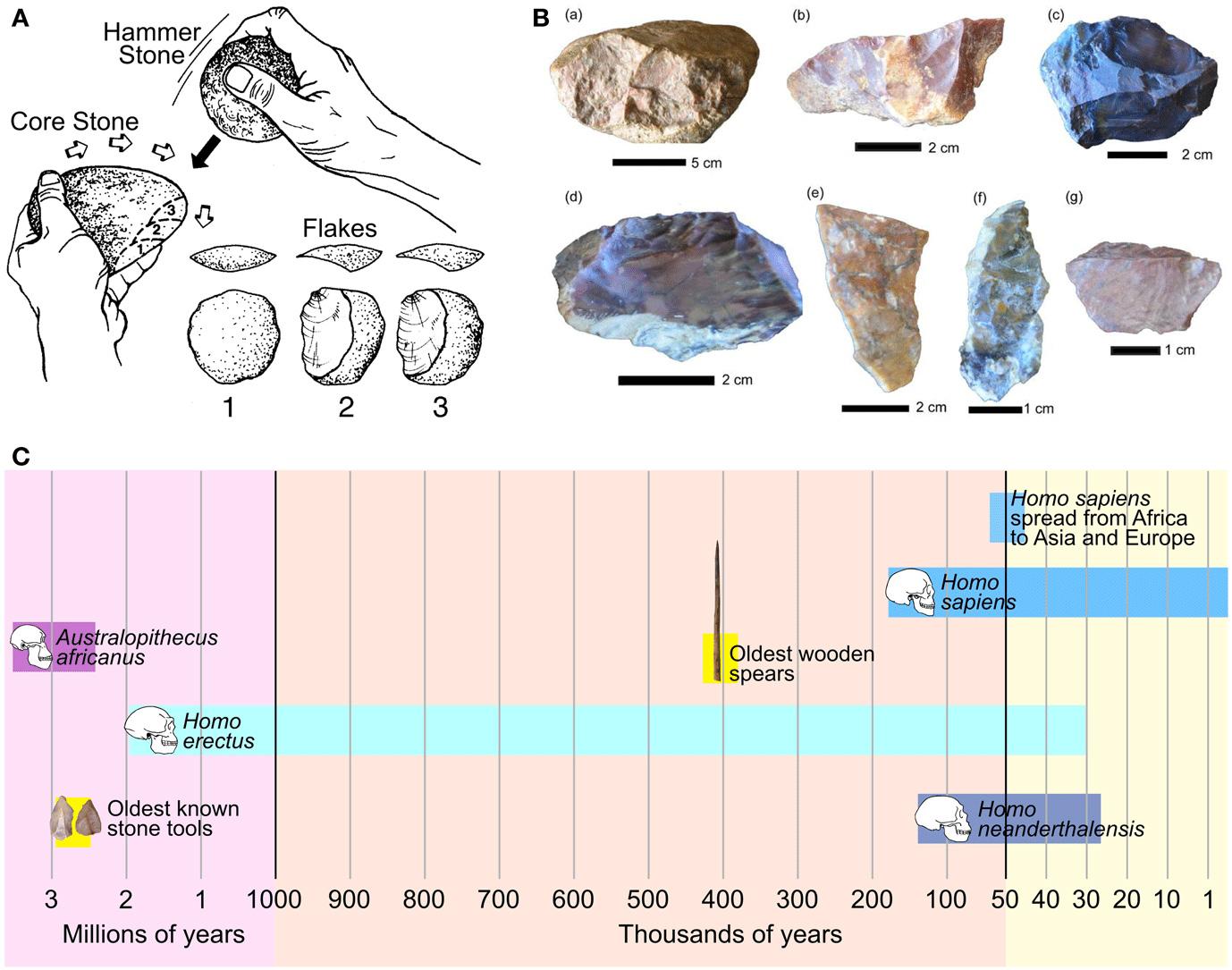 Figure 3 - The origins of stone tool technology.