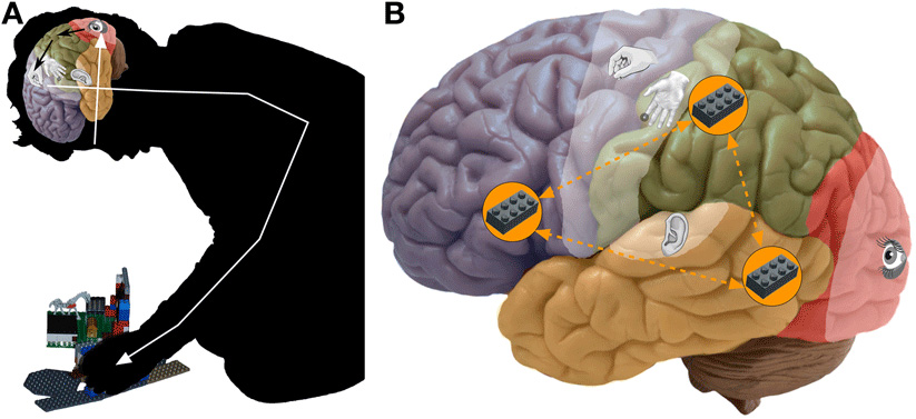 Figure 5 - Tool-specific brain activations or the Lego building network.