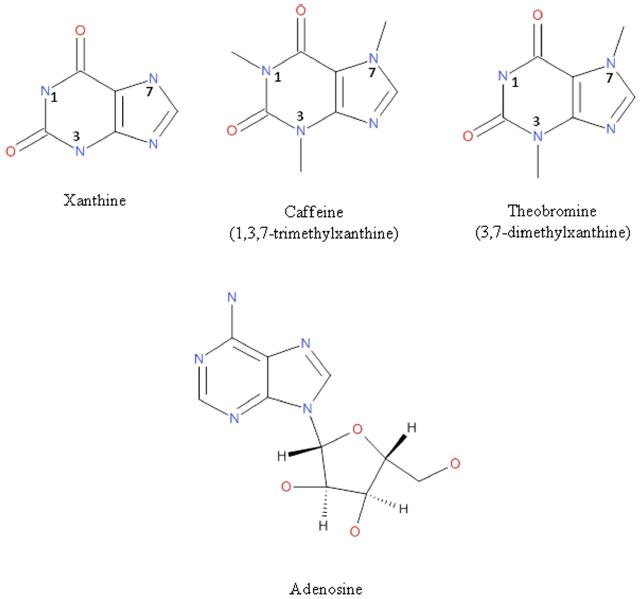 Theobromine essay