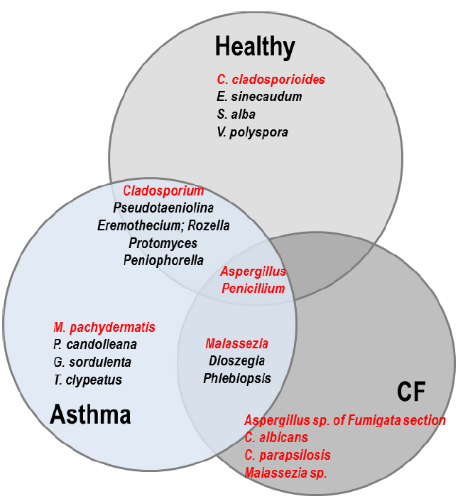 Frontiers the lung mycobiome an emerging field of the human frontiersin ccuart Choice Image