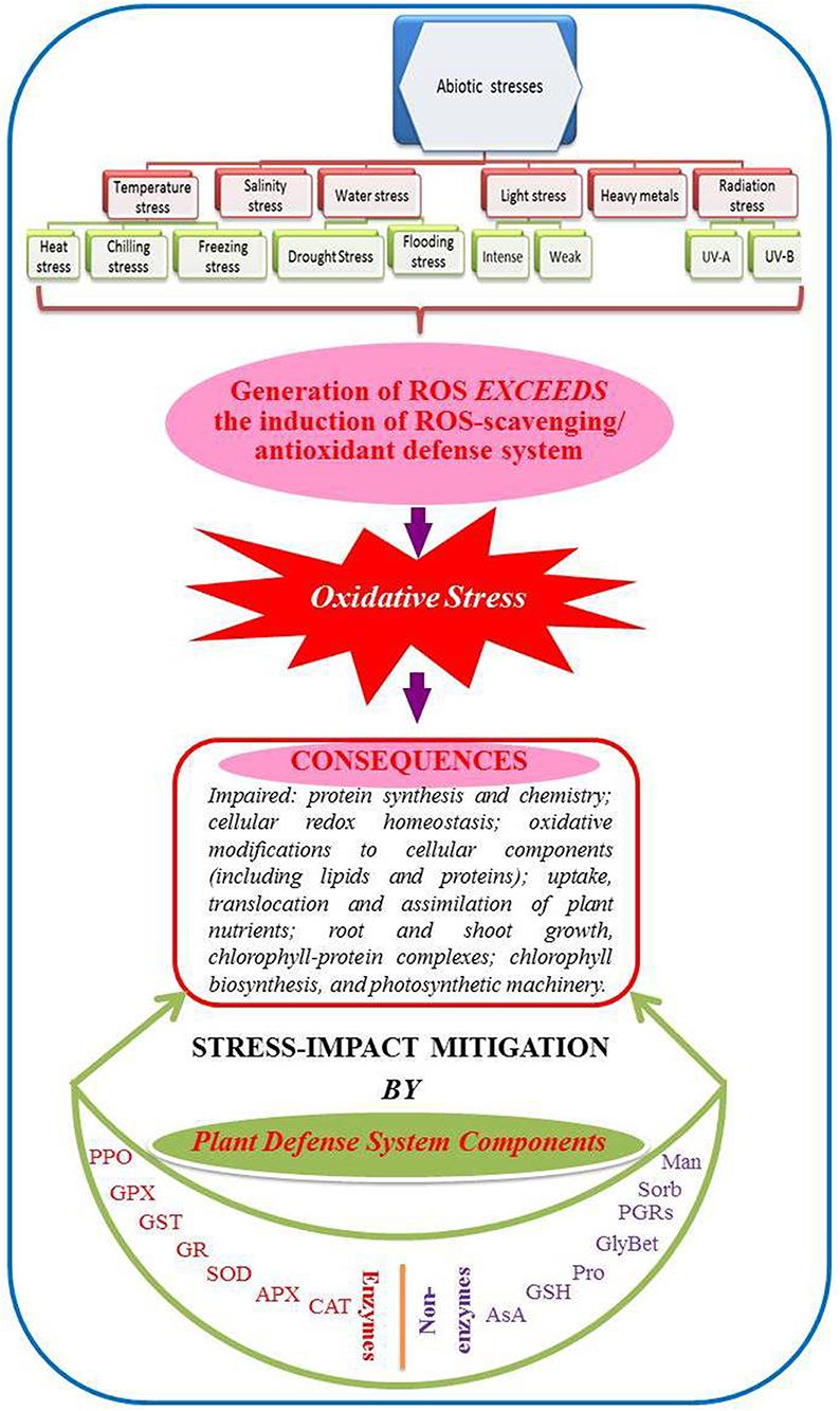 brassinosteroids function