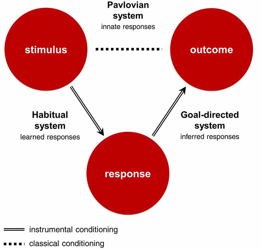 Frontiers - Goal-directed, habitual and Pavlovian ...