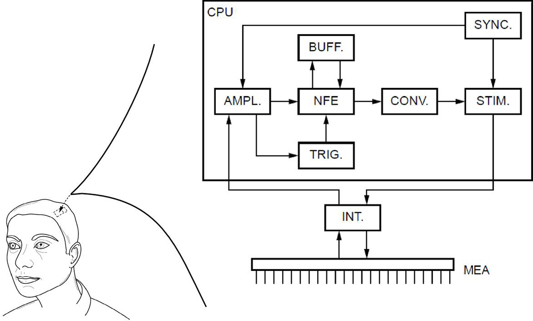 Frontiers using a virtual cortical module implementing a neural frontiersin ccuart Image collections