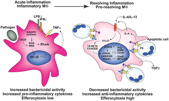 regulation of the nuclear activities of brassinosteroid signaling