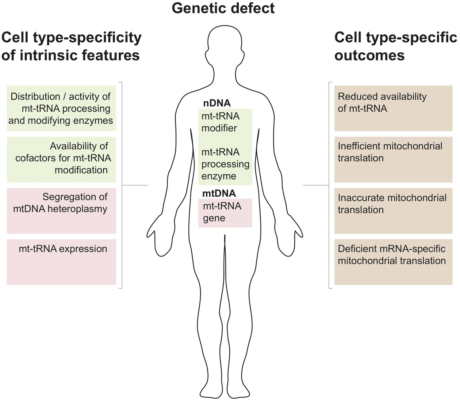 Frontiers | Nuclear-encoded factors involved in post
