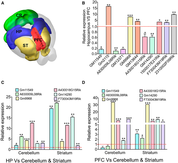 Frontiers transcriptome analyses of adult mouse brain reveal frontiersin ccuart Gallery
