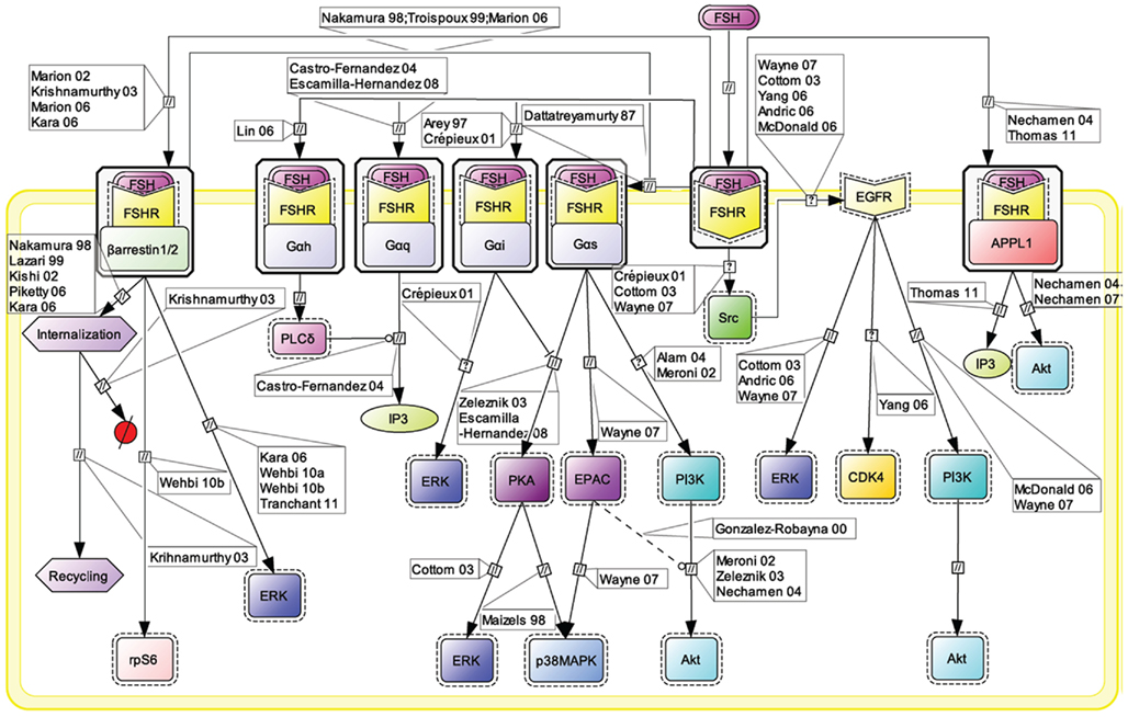 Hormone Concept Map.Frontiers Mapping The Follicle Stimulating Hormone Induced