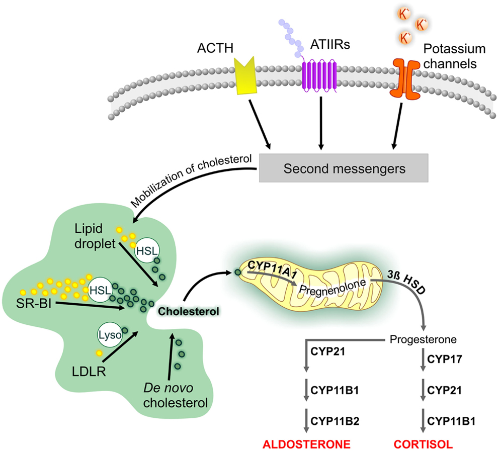 Frontiers Mechanisms Mediating Environmental Chemical Induced
