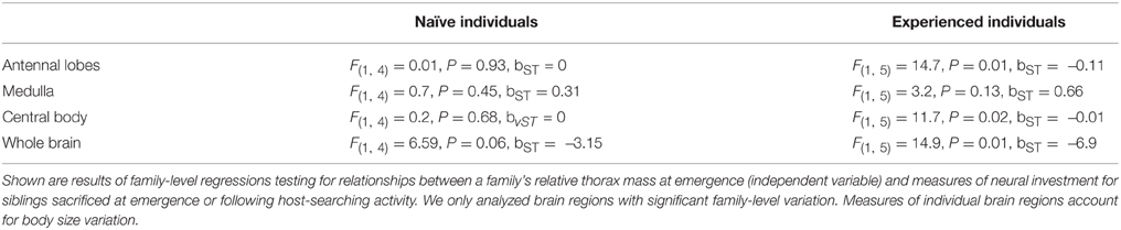 relationship between brain size and body measurements