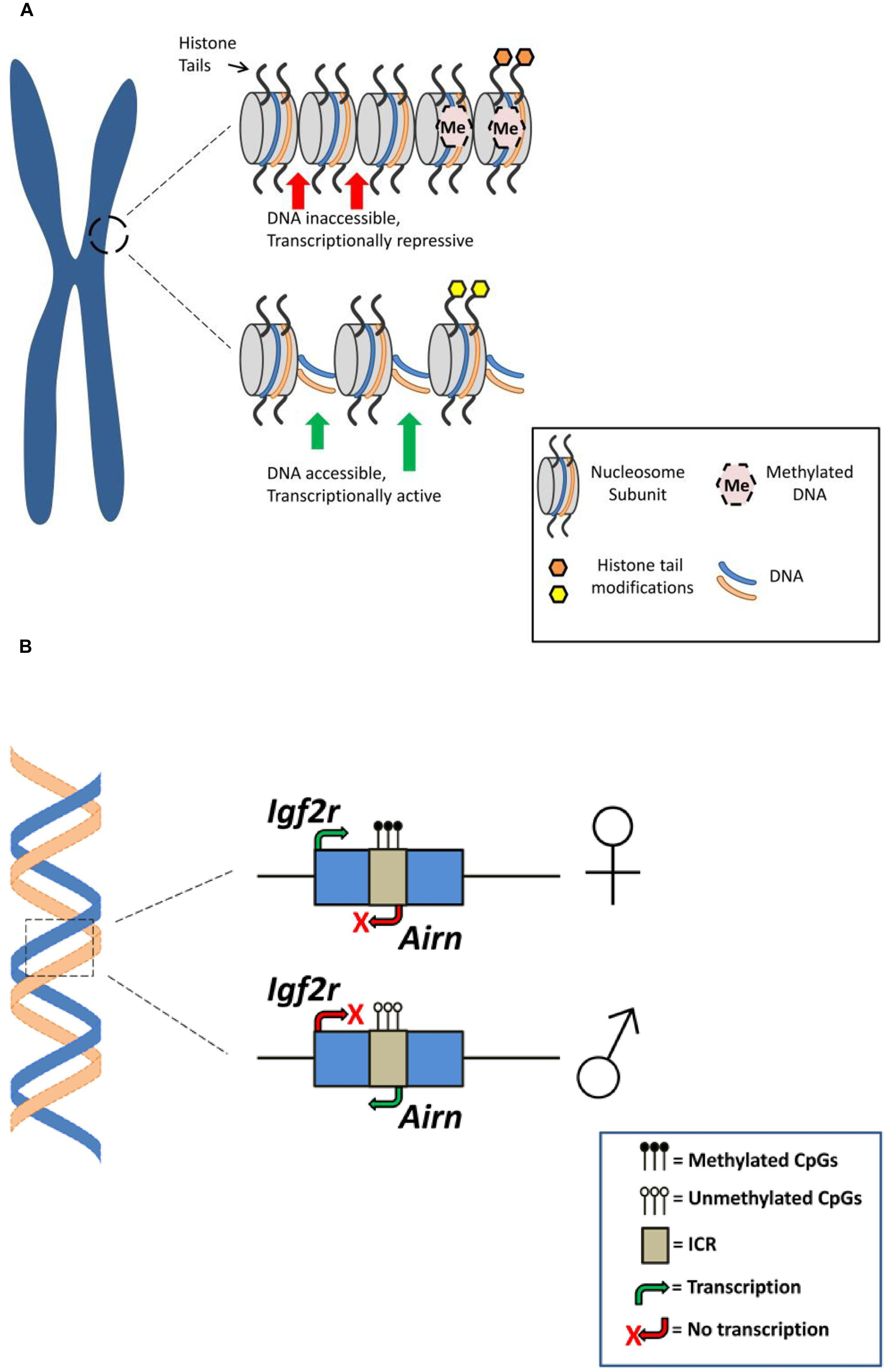 Methylation epigenetic