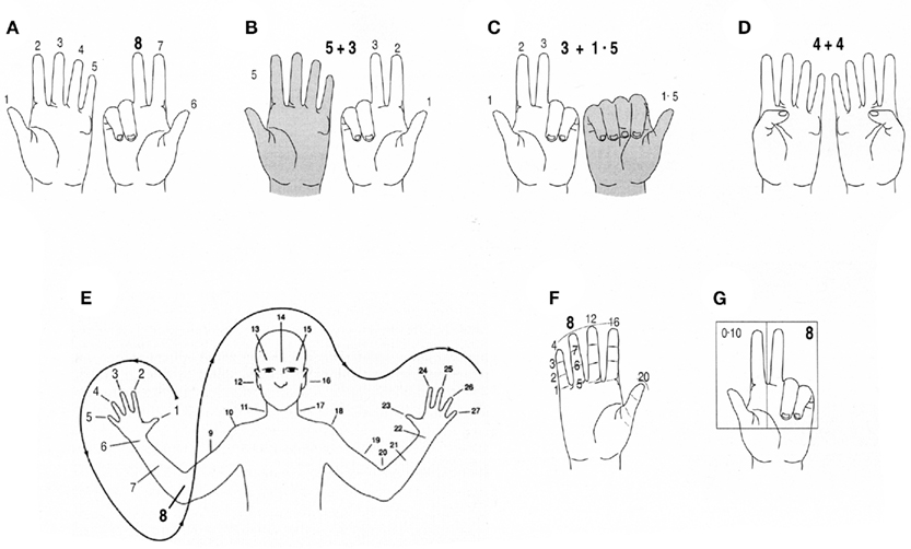 Frontiers Fingers As A Tool For Counting Naturally Fixed Or
