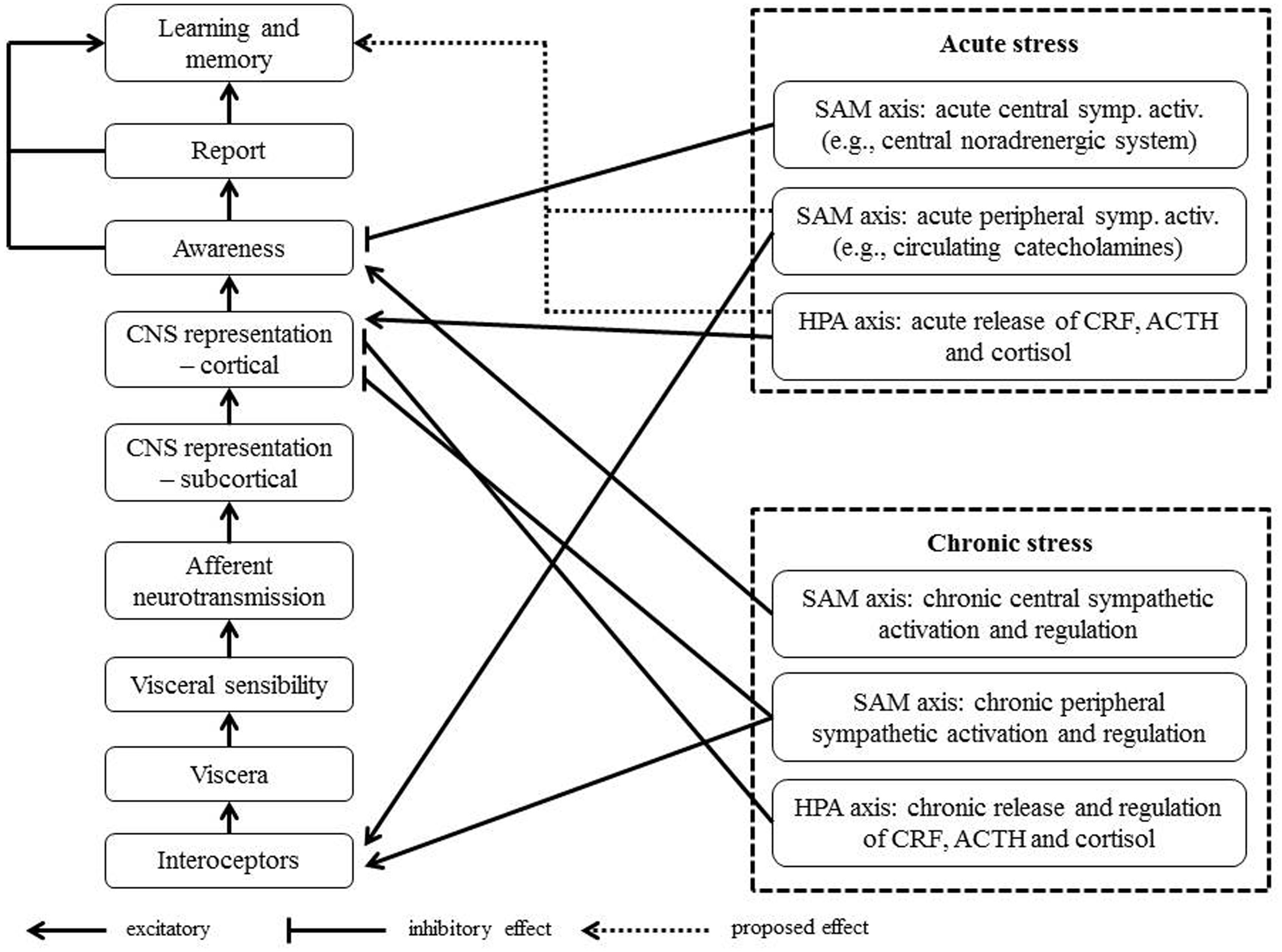 How Do Acute And Chronic Stress Impact >> Frontiers Interoception And Stress Psychology