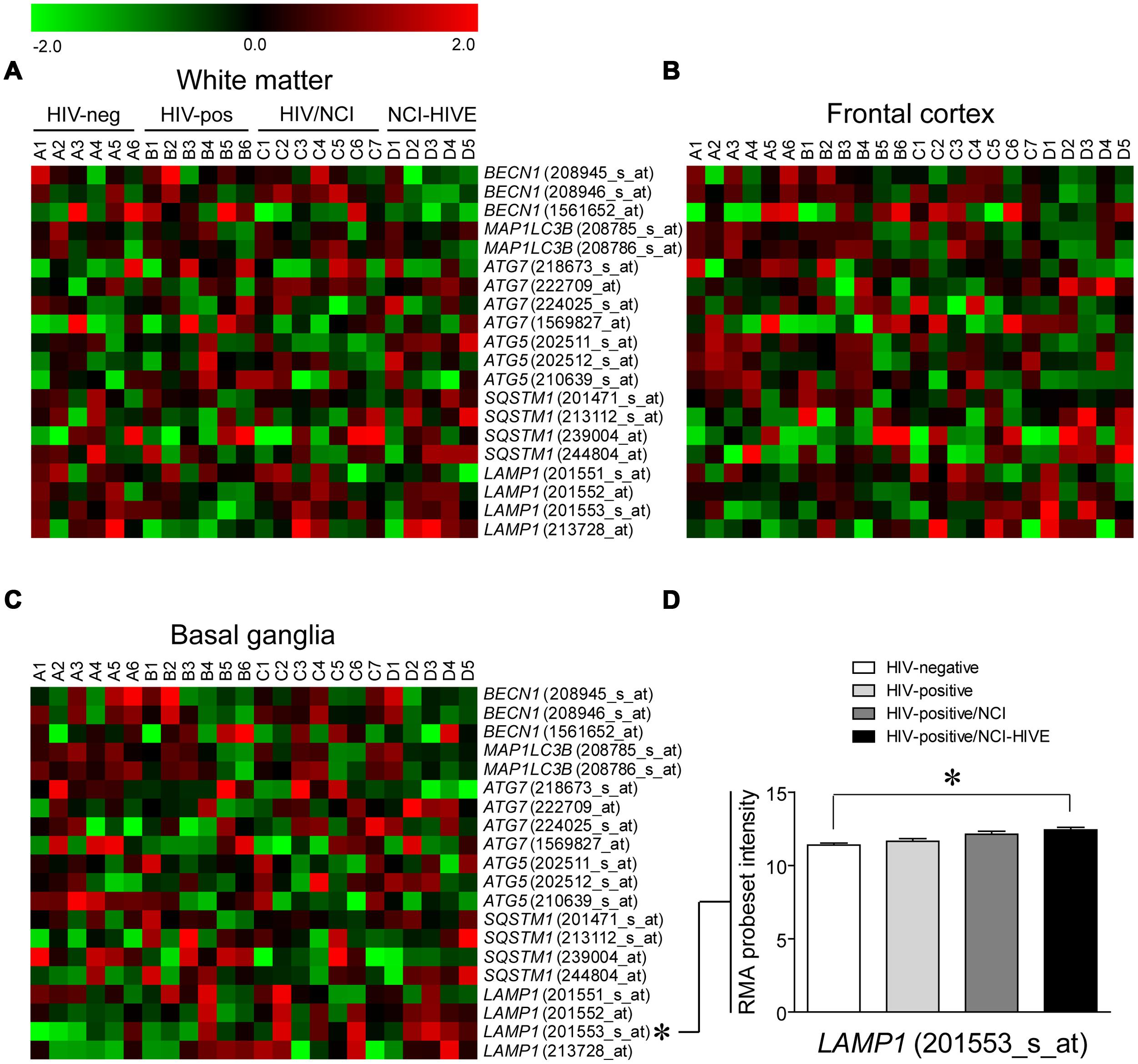 Frontiers | Differing roles of autophagy in HIV-associated ...