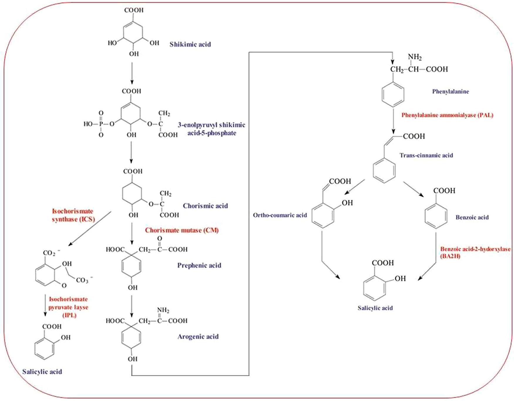 Frontiers | Salicylic acid-induced abiotic stress tolerance