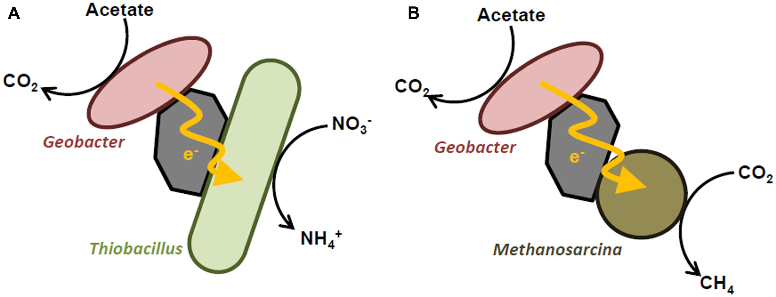 Frontiers Microbial Interspecies Interactions Recent Findings In Kato Signal Wiring Diagram Figure 2 Schematic