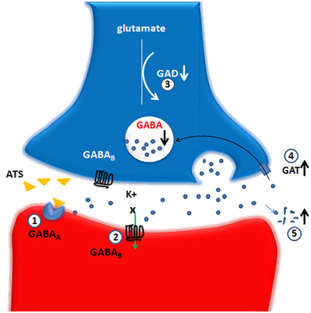 Frontiers | The role of the GABA system in amphetamine-type