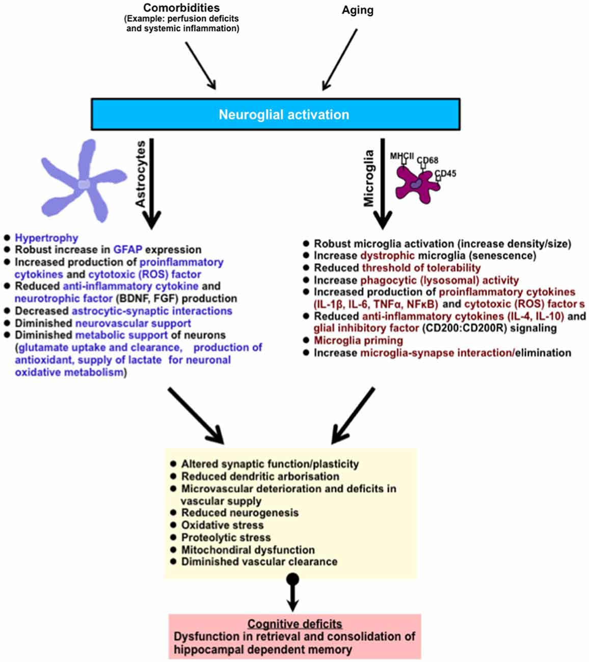 frontiers | impact of age-related neuroglial cell responses on