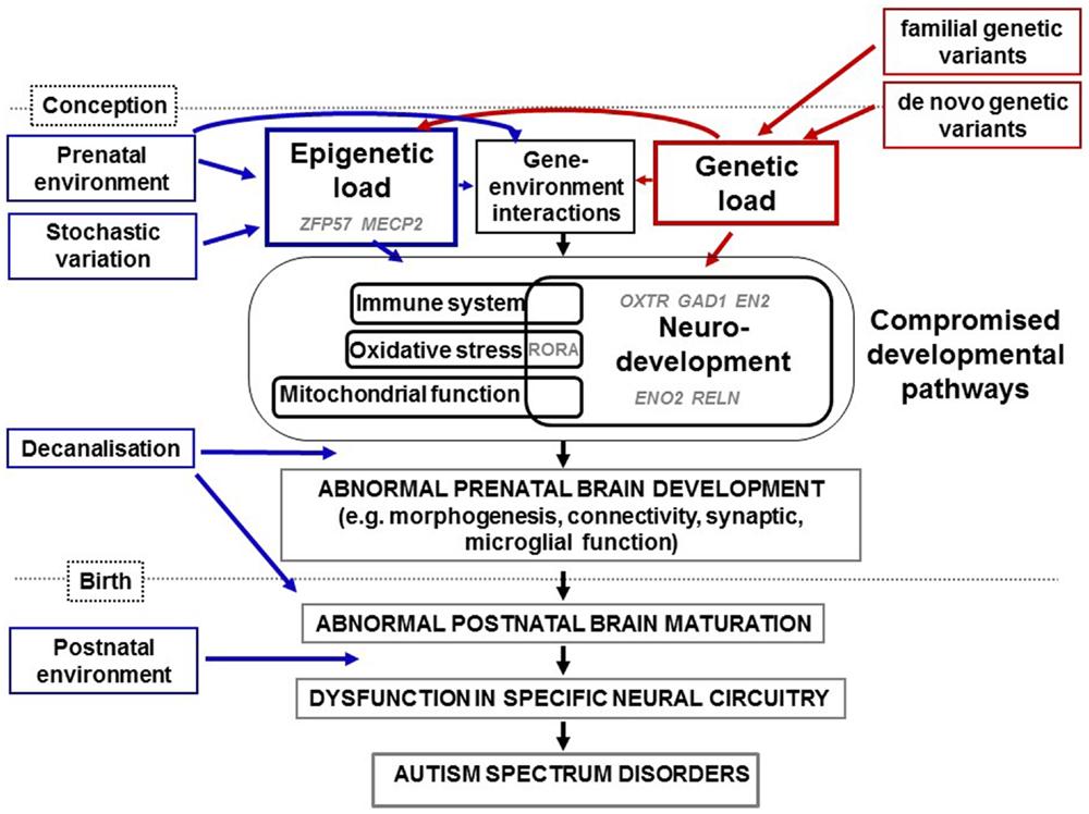 Frontiers | The Role of Epigenetic Change in Autism Spectrum ...