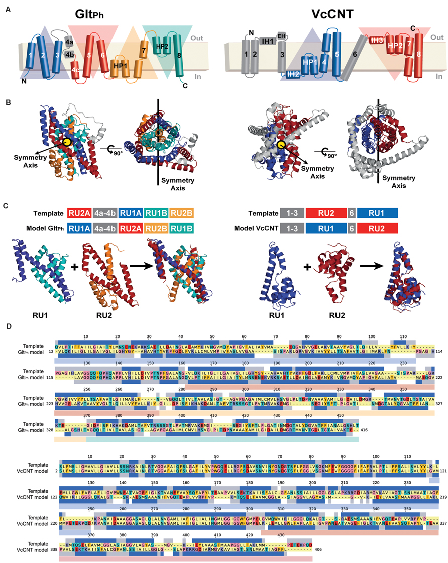 Explanation-prediction symmetry thesis