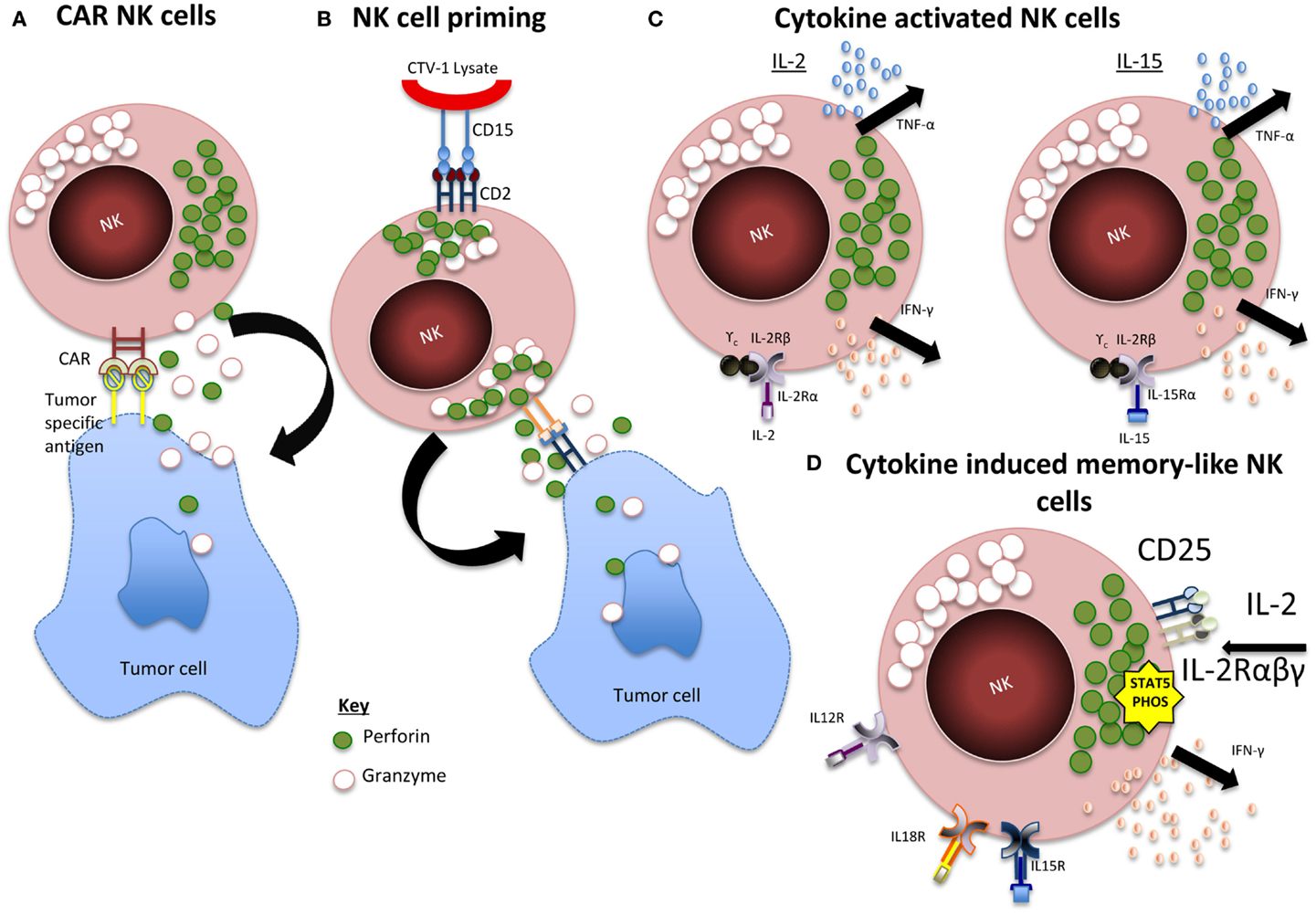 frontiers   natural killer cell immunotherapy: from bench to bedside