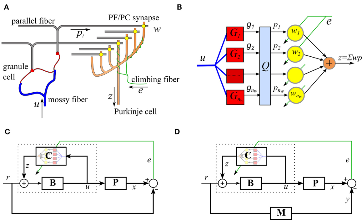 Frontiers | Biohybrid Control of General Linear Systems