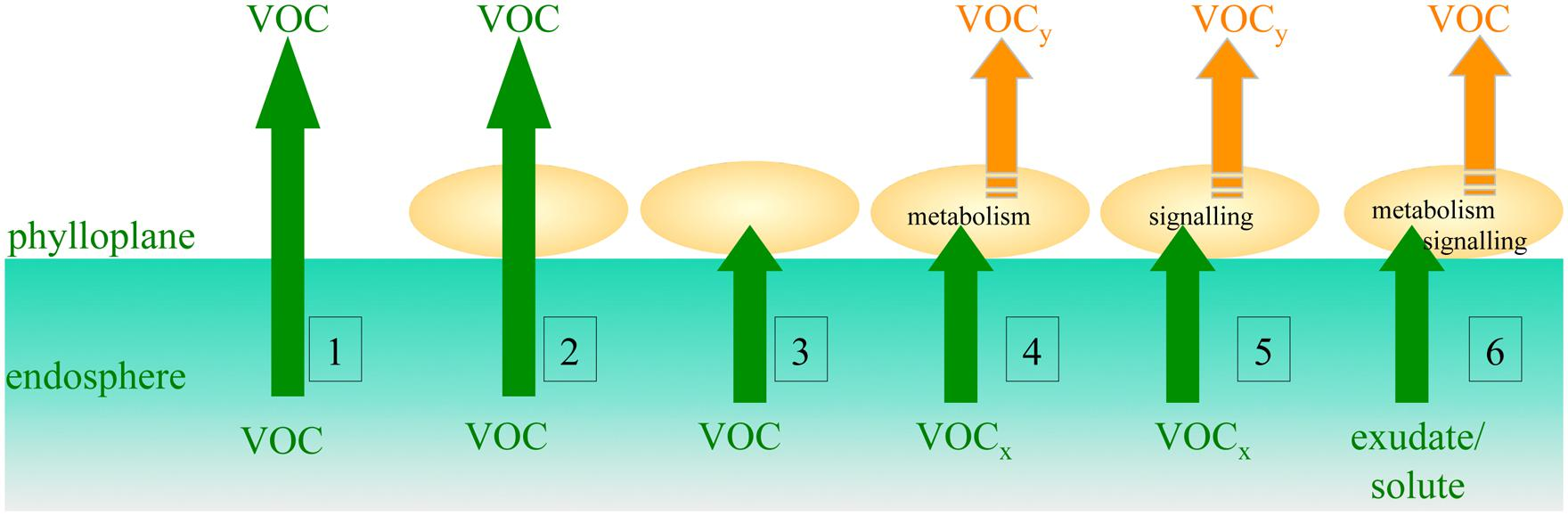 Frontiers Pivotal Roles Of Phyllosphere Microorganisms At The Based On Simple Circuit V1 By Amcmanus