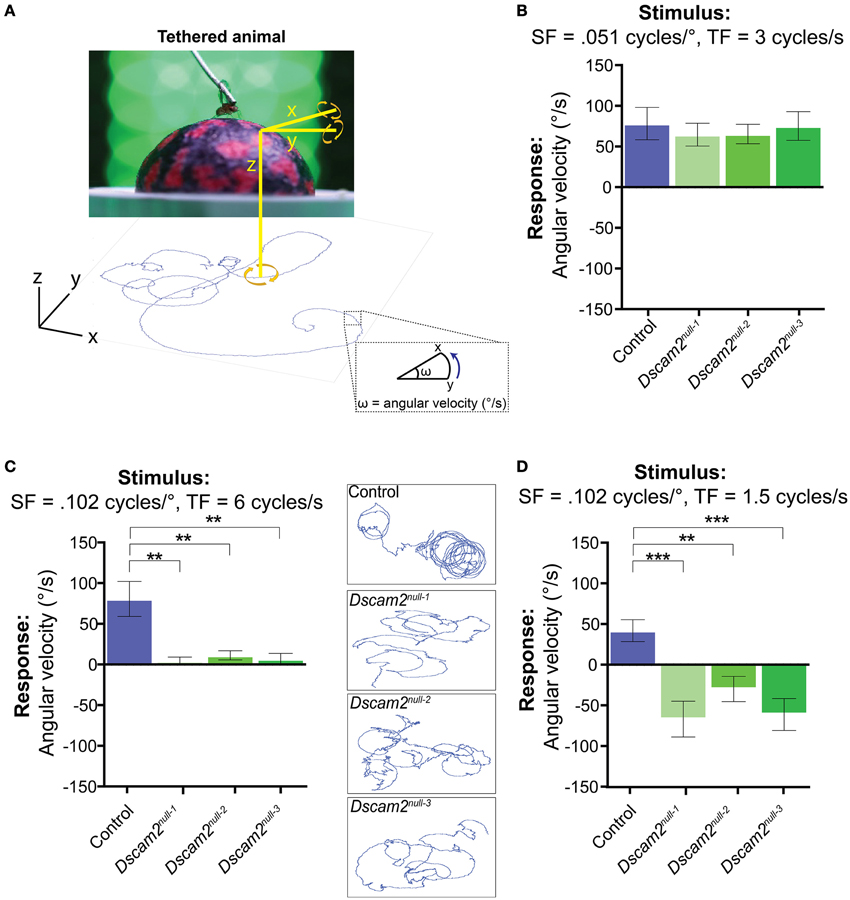 Frontiers | Dscam2 affects visual perception in Drosophila