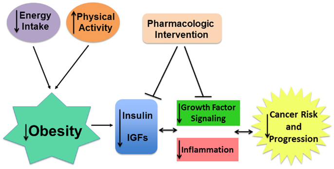 igf-1 treatment in adults