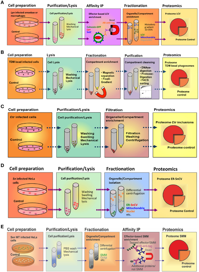 Frontiers | Purification and proteomics of pathogen-modified
