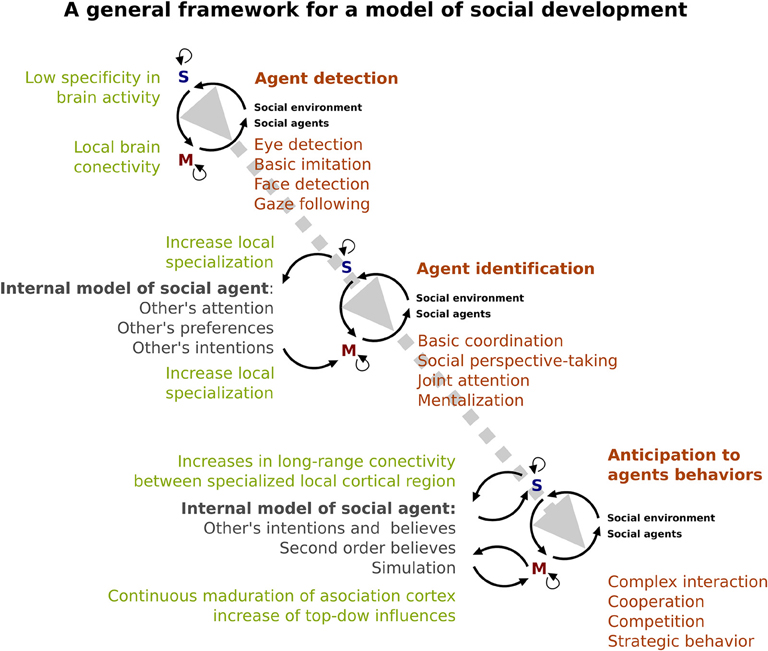 Frontiers development of social skills in children neural and frontiersin malvernweather Images
