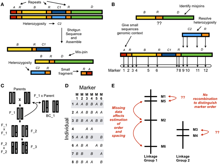 Frontiers | Using linkage maps to correct and scaffold de novo ... on