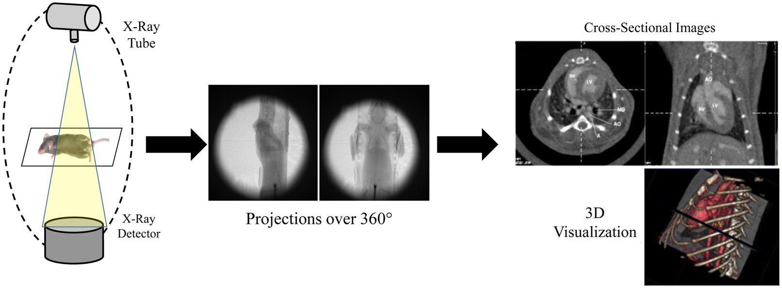 Frontiers In Vivo Small Animal Micro Ct Using
