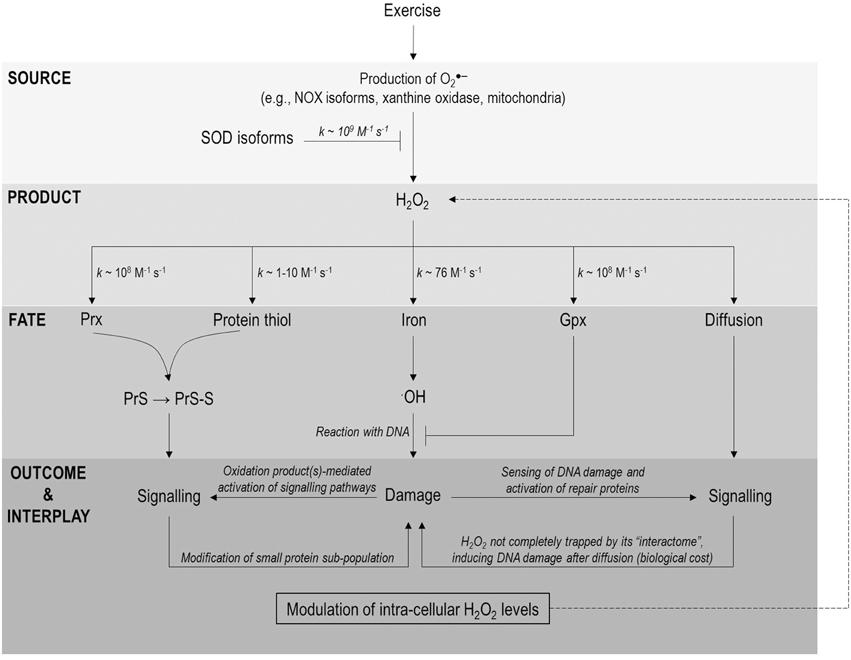 epub meshfree methods for partial differential equations