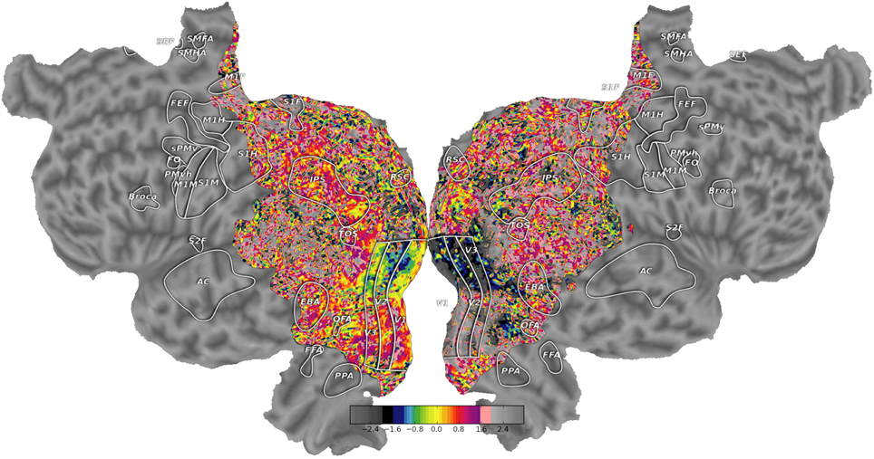 Frontiers | Pycortex: an interactive surface visualizer for