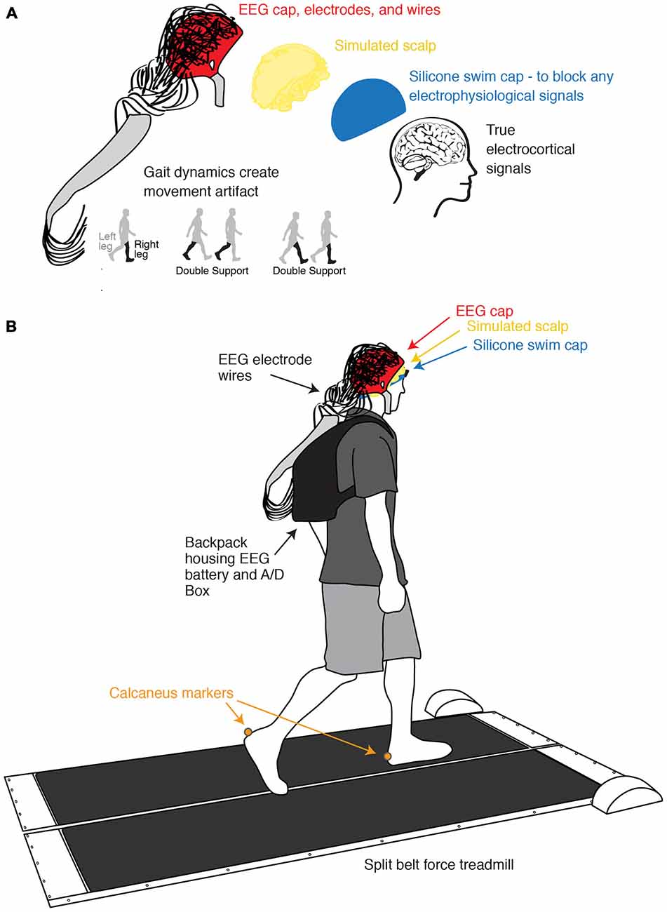 Frontiers | Independent Component Analysis of Gait-Related Movement ...