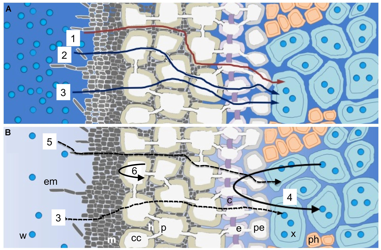 Fpls G on Hydraulic Schematic Diagram