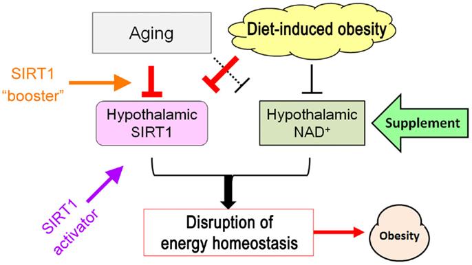 Hormone vs. Kalorien - was ist wichtiger?