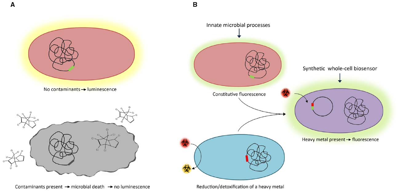 an introduction to the microbial biosensors Two-component regulatory systems based on microbial biosensors  acidic  amino acids by introduction of a chimeric two-component system.