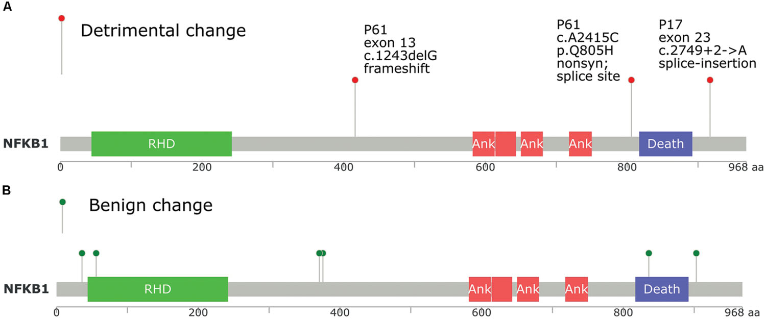 Frontiers Exome Sequencing Of A Colorectal Cancer Family Reveals Shared Mutation Pattern And Predisposition Circuitry Along Tumor Pathways Genetics