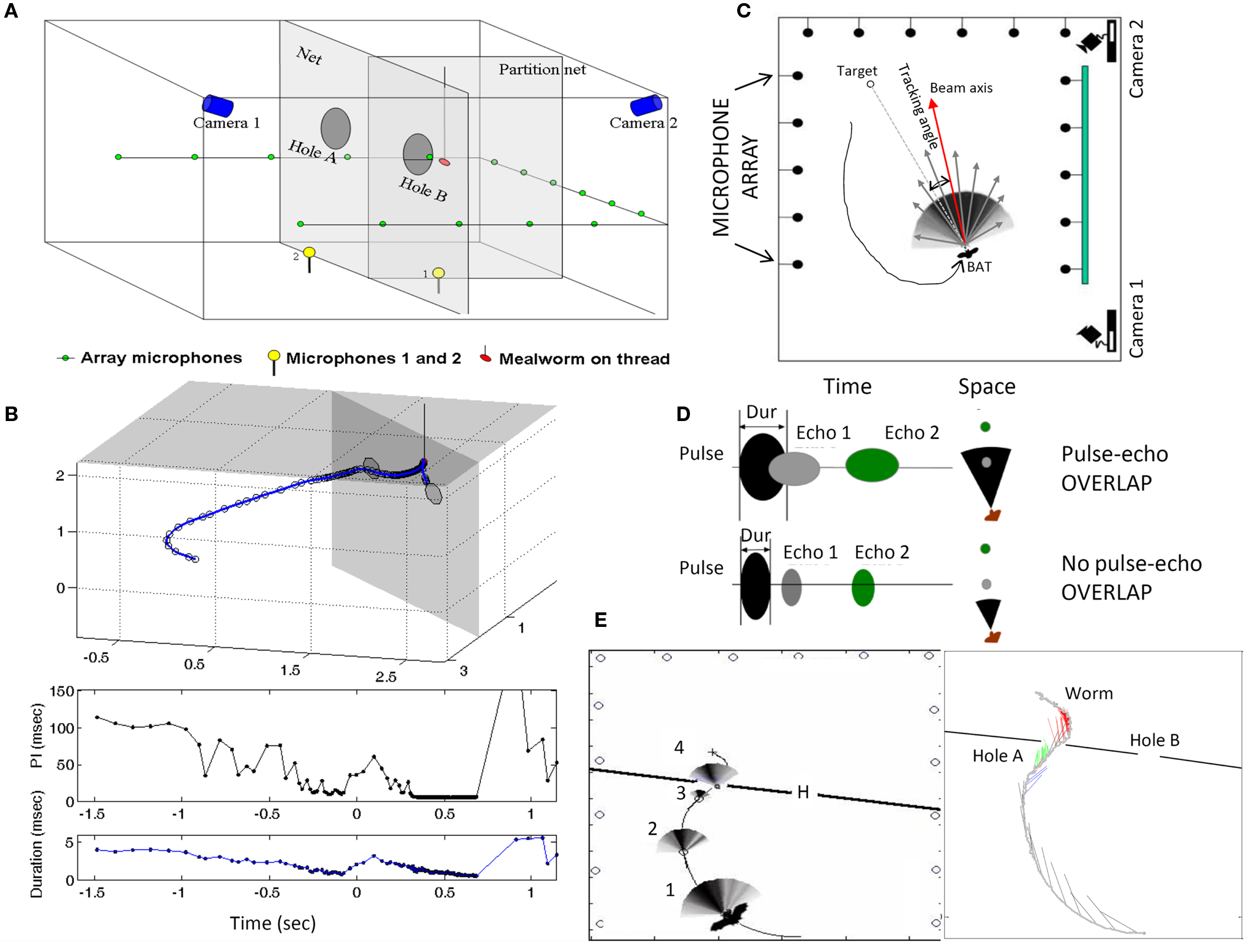 Frontiers Probing The Natural Scene By Echolocation In Bats Bat Detector Schematics To Make A
