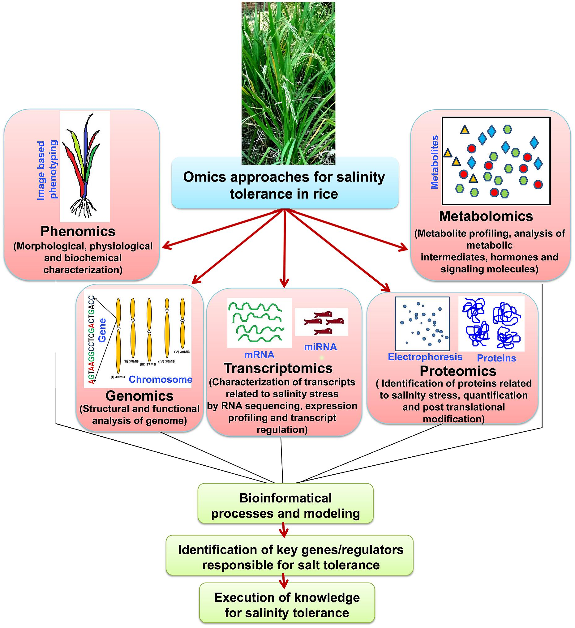 the flowering response of the rice Physiological responses to nitrogen in plants ments at the time of flowering in indica rice which is believed to have a higher sterility percent in a low nitrogen-response variety, whereas the increase was far.