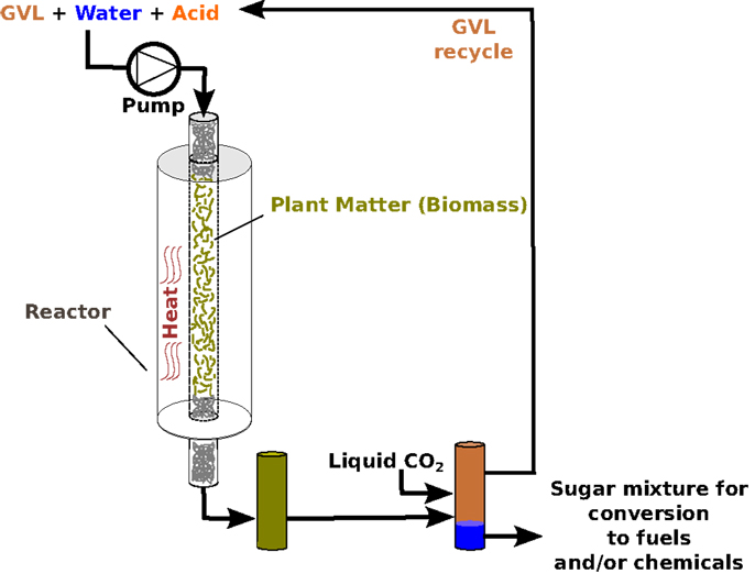 Figure 2 - Illustration of sugar production from plants, using GVL as a solvent.