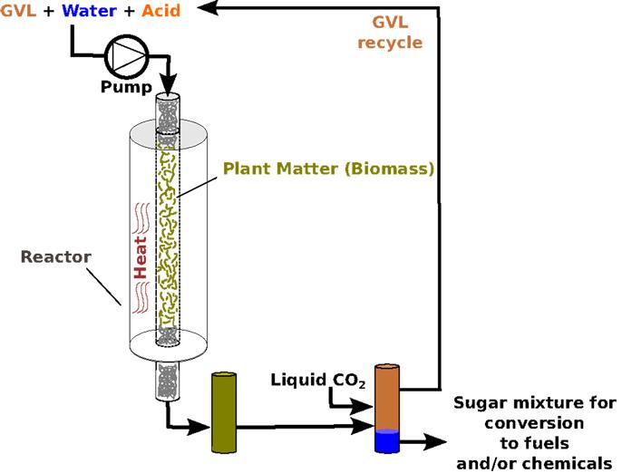 איור 2 - המחשת תהליך ייצור הסוכרים מצמחים, תוך שימוש ב-GVL בתור הממס.