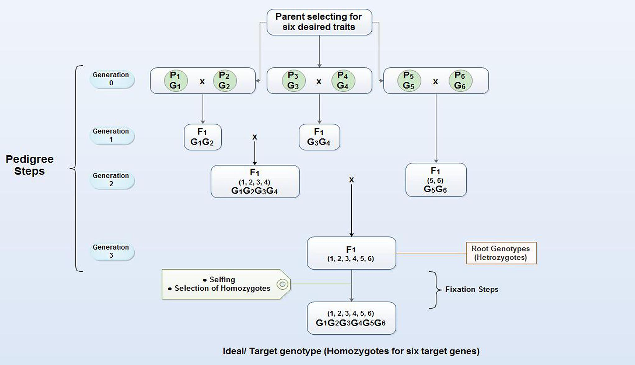Frontiers | Molecular Breeding Strategy and Challenges